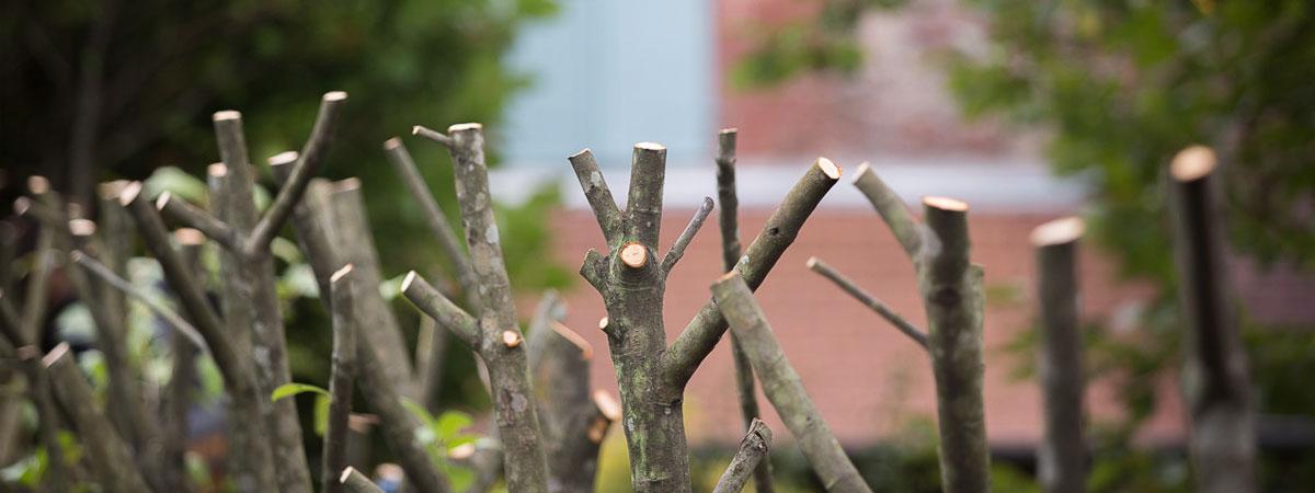 Taille des arbres et haies